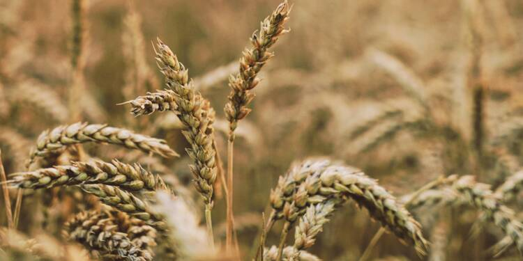 Perfarmer : l'application qui traque les cours du blé et du maïs