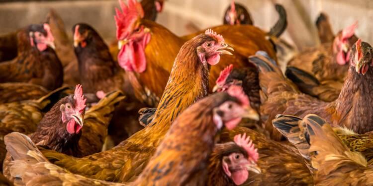 Dans le nord, le poulailler aux 107.000 poules ne passe pas