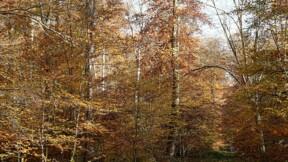 Des caméras de vidéosurveillance dans la forêt de Compiègne