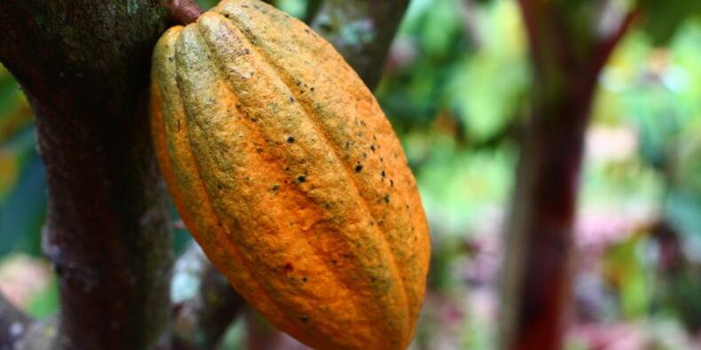 Cacao : profitez de la flambée des cours !