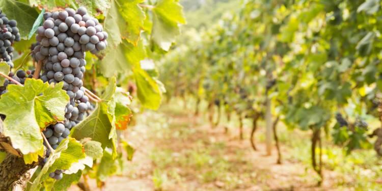 Un célèbre viticulteur bordelais condamné pour avoir mélangé vin de table et AOC