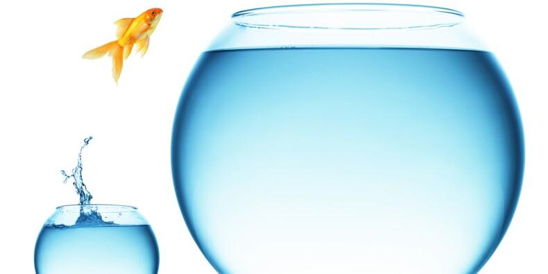 La résilience, nouveau facteur de performance au boulot ?