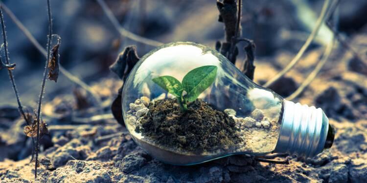 12 idées de business verts à suivre