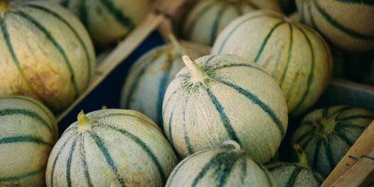 La grande inquiétude des producteurs de melons après la canicule