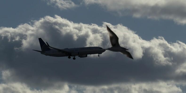 L'avion du futur pourrait ressembler à un oiseau de proie