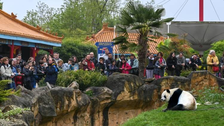 Zoo de Beauval, une arche de Noé qui rapporte gros