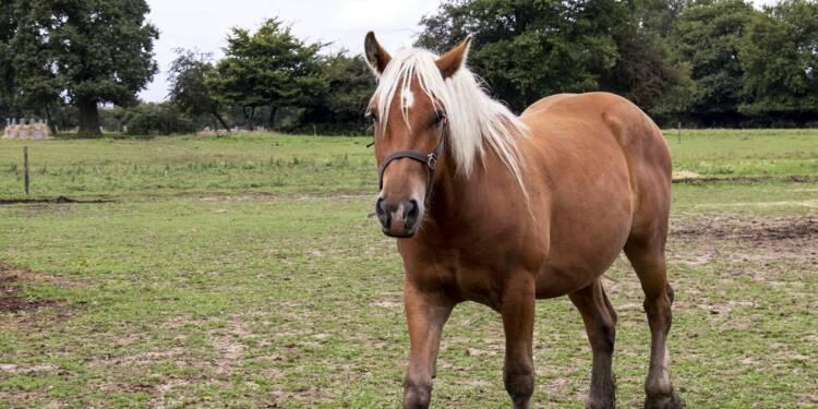 Haut-Rhin : ils attaquent leurs voisins en justice en raison du crottin de leur cheval