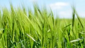 Ces placements innovants qui vous permettent de soutenir le secteur agricole