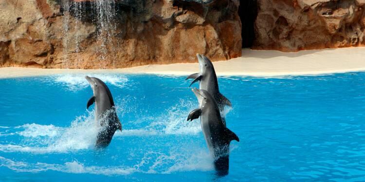 TripAdvisor met fin aux ventes de billets pour les spectacles de dauphins et baleines