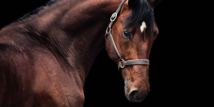 Un cheikh dépense 4 millions de dollars pour un cheval