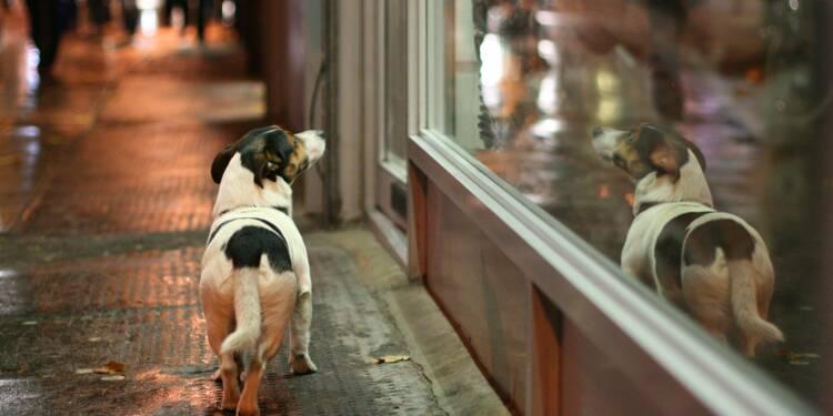 Attention, les arnaques aux chiens perdus se multiplient