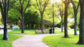 Une commune des Hauts-de-Seine offre 200 euros à ses habitants pour planter des arbres