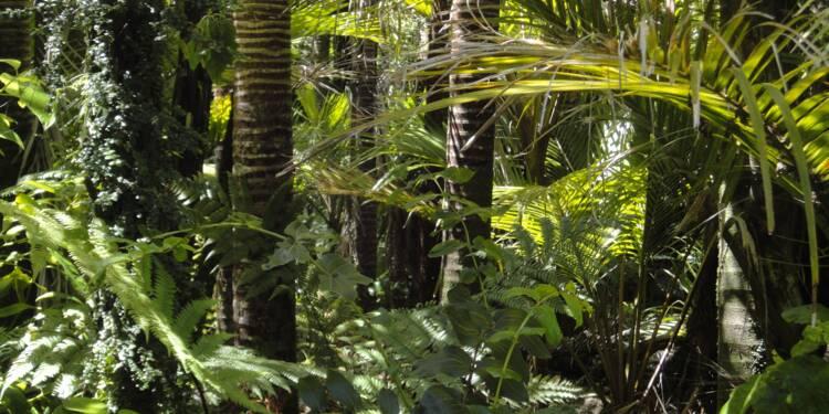 """Amazonie : la """"forêt debout"""", modèle pour sauver l'économie du poumon de la planète ?"""