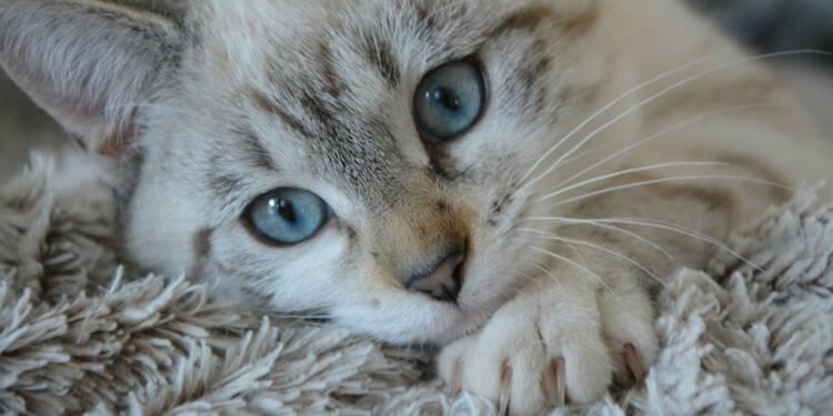 Abandon de chats : l'amende salée proposée par un ministre contre les propriétaires