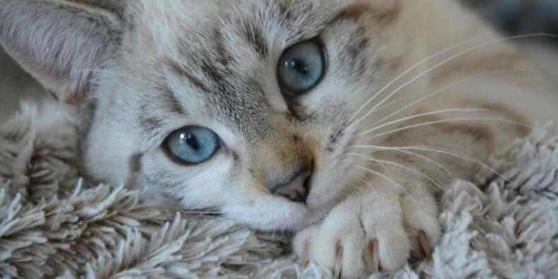 Des Montpelliérains risquent une amende pour avoir nourri des chats