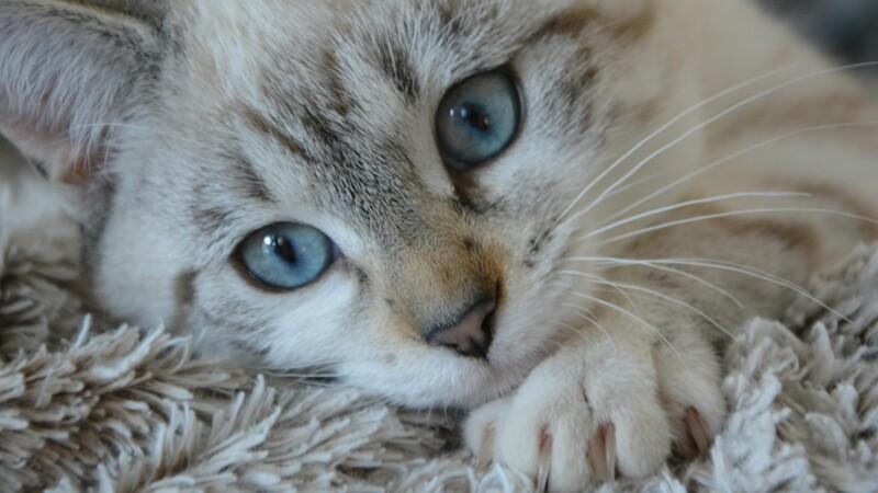 Pau : trafic de chiots et chatons et fraude aux prestations sociales devant la justice