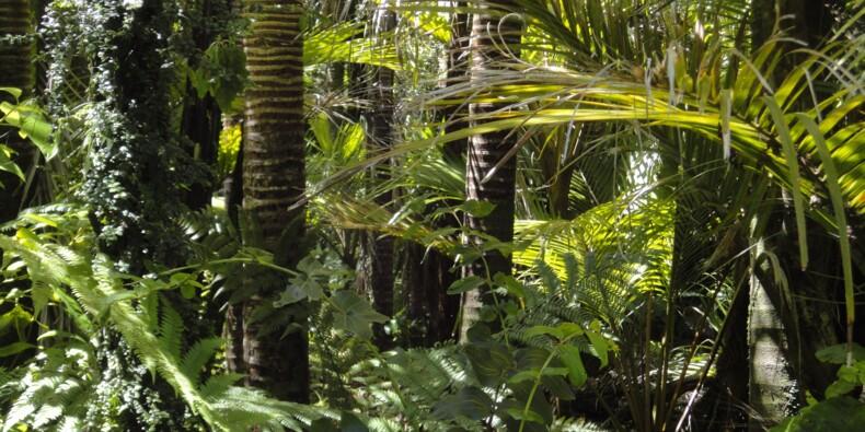 Amazonie : 10.000 km2 déboisés en un an, la déforestation au plus haut depuis 2008