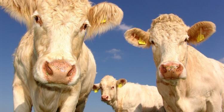 Indre-et-Loire : l'agrandissement d'une ferme provoque la colère des riverains et des élus