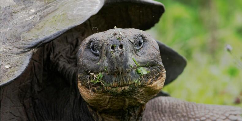 Galapagos : il écrase une tortue et écope d'une amende de 11.000 dollars