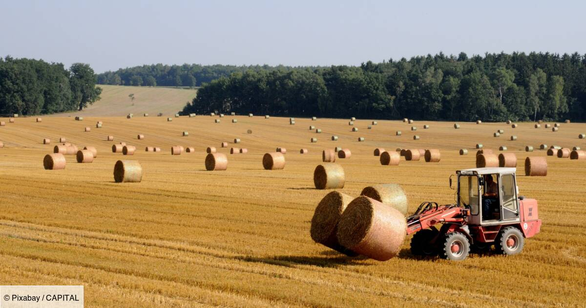 Retraites : les pensions actuelles des agriculteurs ne seront pas revalorisées