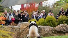 Les nouveautés que prévoit le zoo de Beauval pour 2020