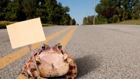 Côtes-d'Armor : quand le département ferme une route pour protéger les grenouilles
