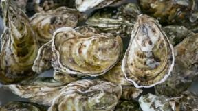 L'épidémie de gastro-entérite frappe les huîtres et perturbe la production