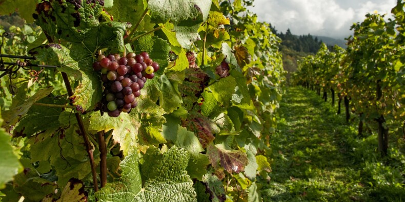 De prestigieux vignobles de la Napa Valley ravagés par un incendie