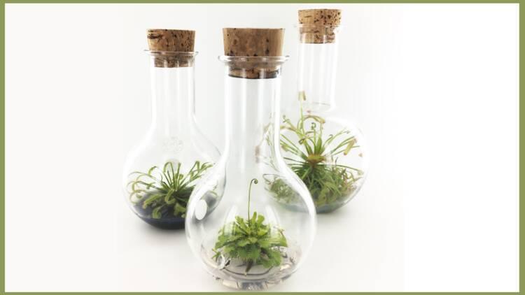 InPlanta, ses plantes se développent sans entretien