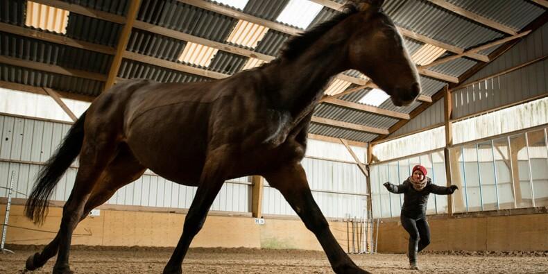 Managers, pensez au coaching... avec un cheval
