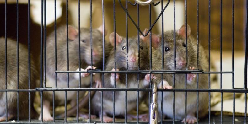 Les laboratoires publics américains au cœur d'un scandale sur la maltraitance des animaux