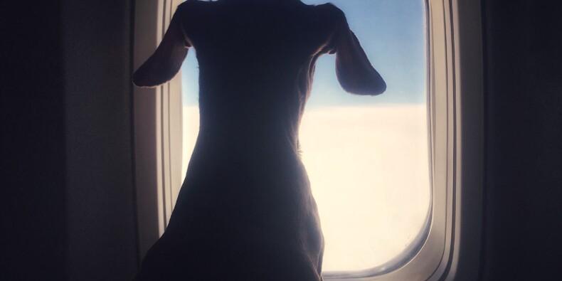 Un chien pourrait recevoir une indemnité après l'annulation de son vol