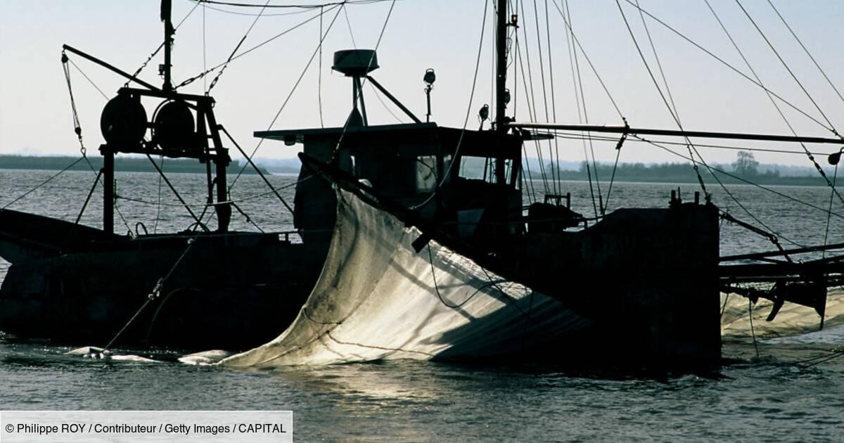 Qu'est-ce que la pibale pêchée en France et vendue 5.000 euros le kilo ?