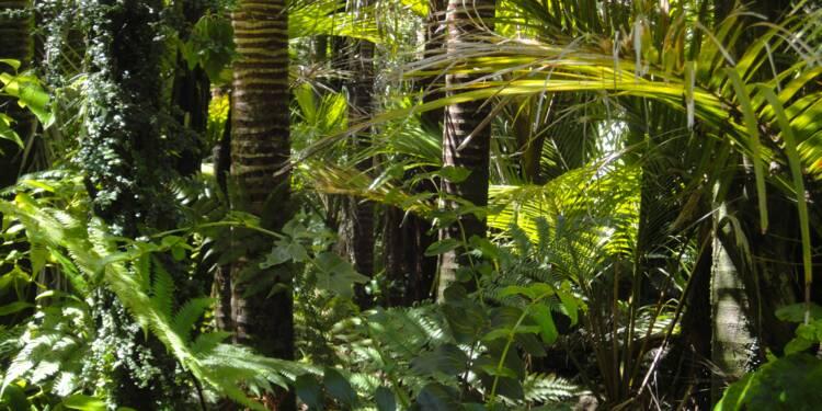 Climat : l'Amazonie risque de devenir une savane aride d'ici 2070, selon des chercheurs