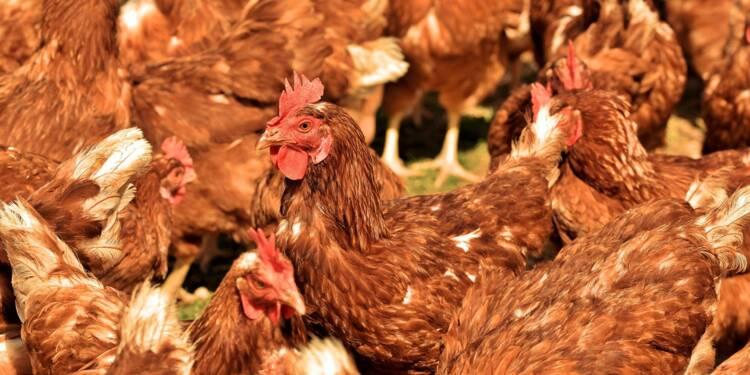 """""""D'ici 2026, nous espérons bannir le poulet standard de nos assiettes"""""""