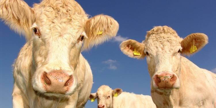 Gaz à effet de serre : les bovins européens ne pèsent que 8% du cheptel mondial
