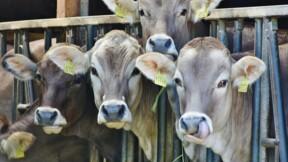 Optimilk améliore la productivité du lait bio