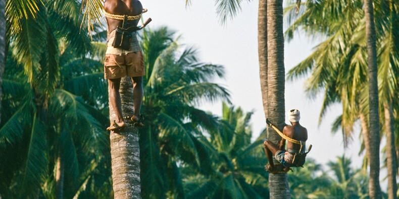 Un homme invente le scooter pour grimper aux arbres