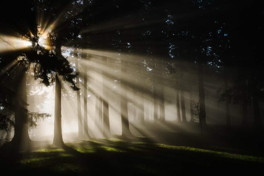 La Forêt-noire (Allemagne)