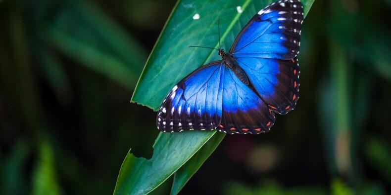 3.000 euros d'amende pour avoir capturé des papillons