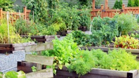 Location d'un jardin : conditions, contrat et coût