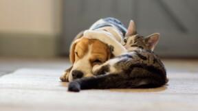 Un décret sur la vente d'animaux indigne 30 Millions d'Amis