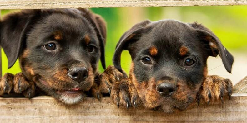 Comment SantéVet est devenu le leader de l'assurance pour animaux de compagnie