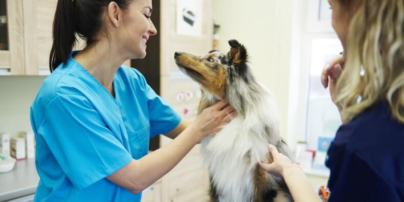 Vétérinaire, architecte, médecin… combien gagnent les travailleurs non salariés ?