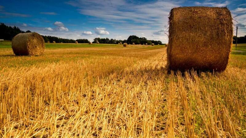 Régionalisation de la PAC : la Bretagne veut en assurer la gestion