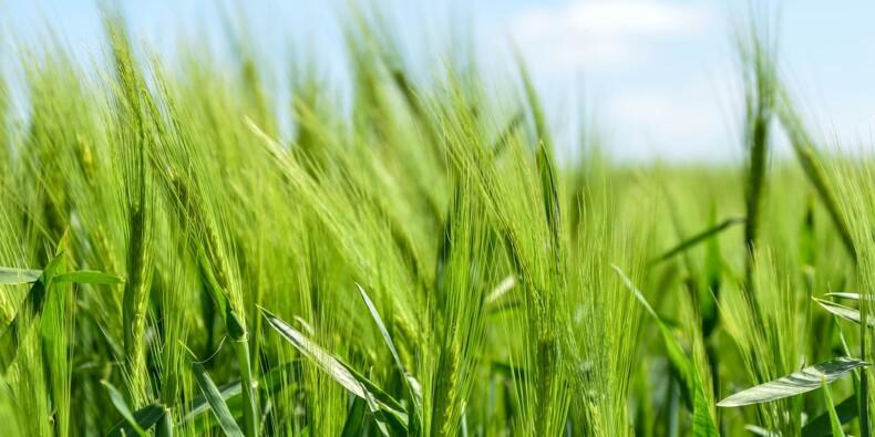 Des pesticides autorisés de longue date en Europe potentiellement dangereux ?