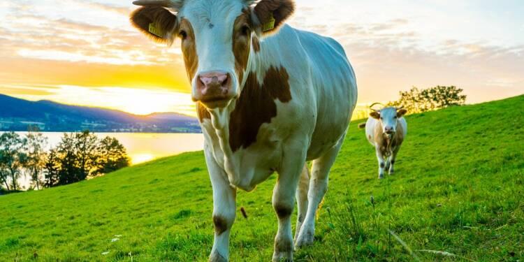 Oh la vache! vous emmène en vacances à la ferme