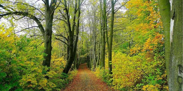 Des centaines d'invendus Carrefour retrouvés dans une forêt