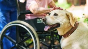 Castres : une personne handicapée porte plainte après avoir été recalée d'un salon de thé avec son chien d'assistance