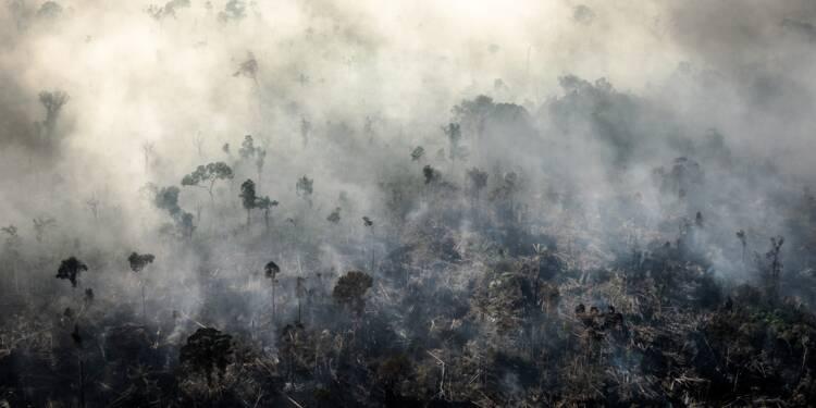 Brésil : la France ne fait rien face à la déforestation de l'Amazonie, dénonce Greenpeace